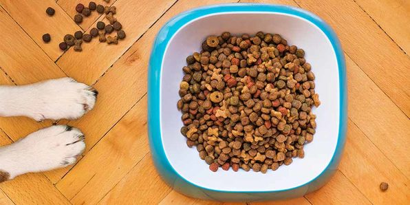 Dog Training Course: BARF - Feed Your Dog A Raw Diet - Product Image