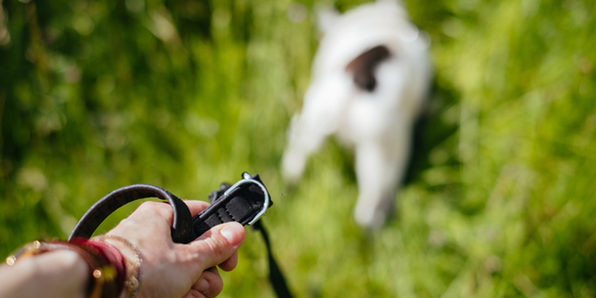 Leash Training: Stop Pulling on the Leash - Product Image