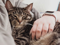 Complete Animal Care & Psychology Training - Product Image