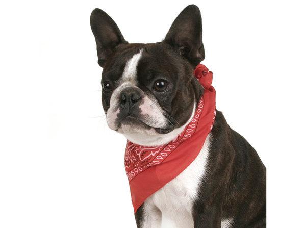 Balec Pack of 2 Paisley Cotton Dog Bandana Triangle Shape  - One Size Fits Most - Hot Pink