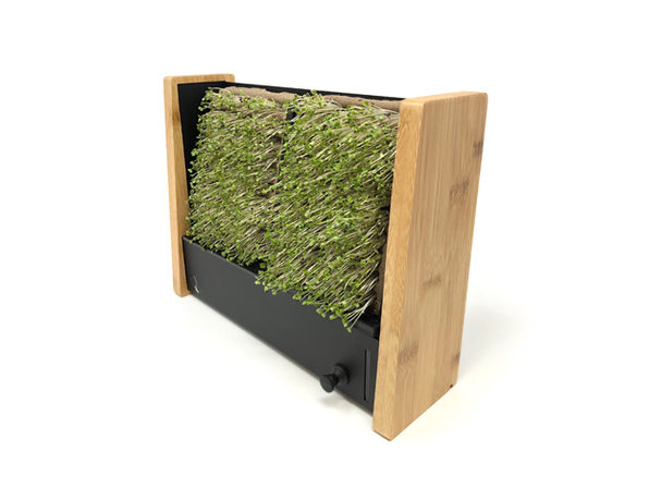 EcoQube Frame + Seed Packs