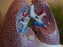 Introduction to the Respiratory System - Product Image