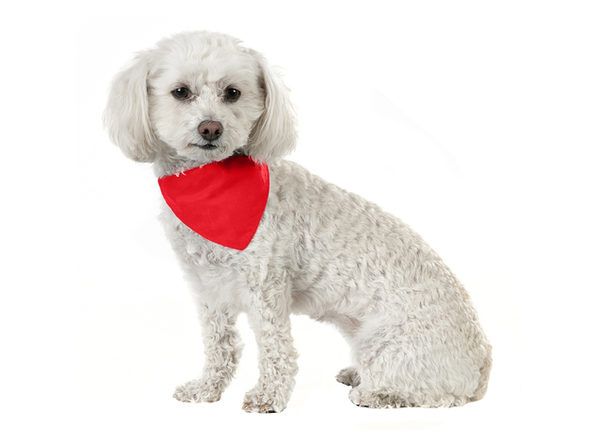 Solid Cotton 8 Pack Dog Bandana Triangle Bibs  - Small and Medium Pets - Green