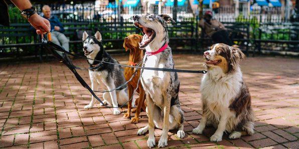 Stop Dog Barking: Easy Dog Training Methods - Product Image