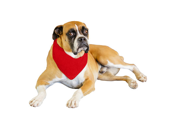 Jordefano Solid Polyester Dog Neckerchief Triangle Bibs - Extra Large - Red