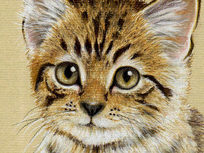 Draw a Kitten Using Pastel Pencils - Product Image