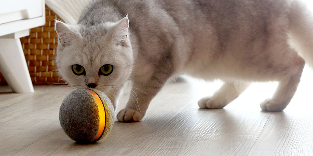 Get the Wicked Ball: Interactive Toy for Cats for $34.36 with promo code CMSAVE20