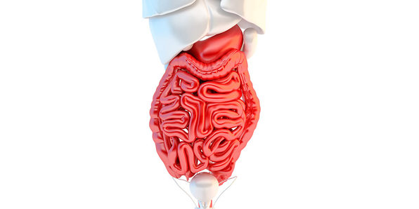 Medical Terminology of the Digestive System - Product Image